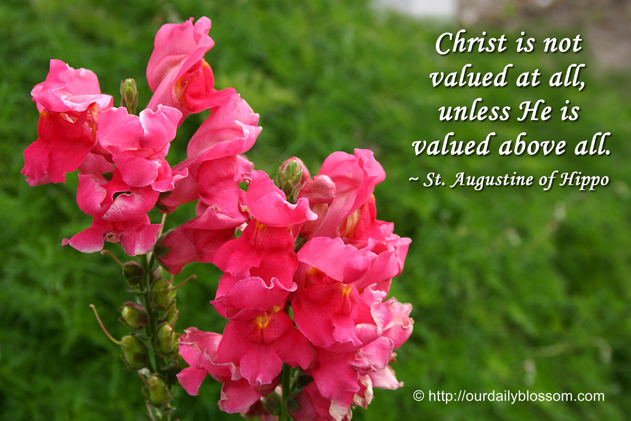 Christ Is Not Valued At All, Unless He Is Valued Above All