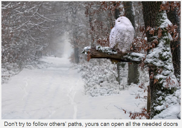 Don't Try To Follow Others Path, Yours Can Open All The Needed Doors