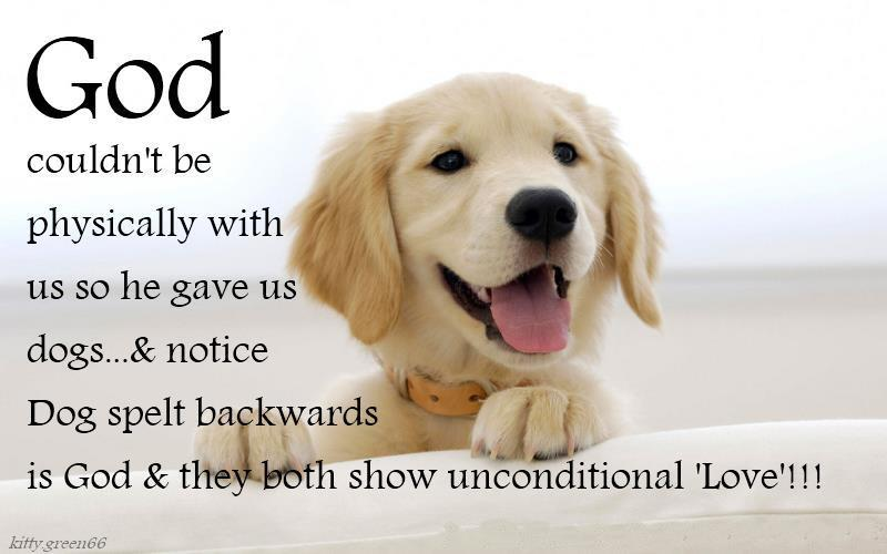 Quotes About Love Dogs : Love Your Dog Quotes. QuotesGram
