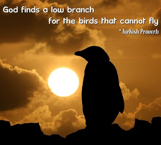 God Finds a Low Branch For The Birds That Cannot Fly