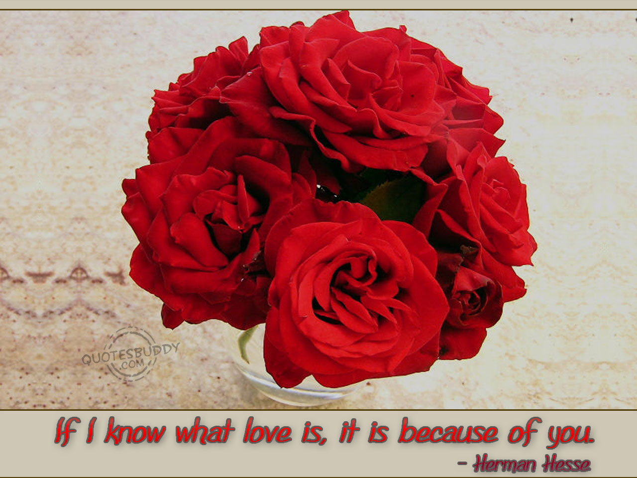If I Know What Love Is, It Is Because Of You ~ Apology Quote