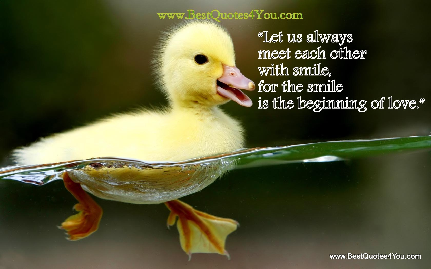 Let Us Always Meet Each Other With Smile For The Smile Is The Beginning of Love""