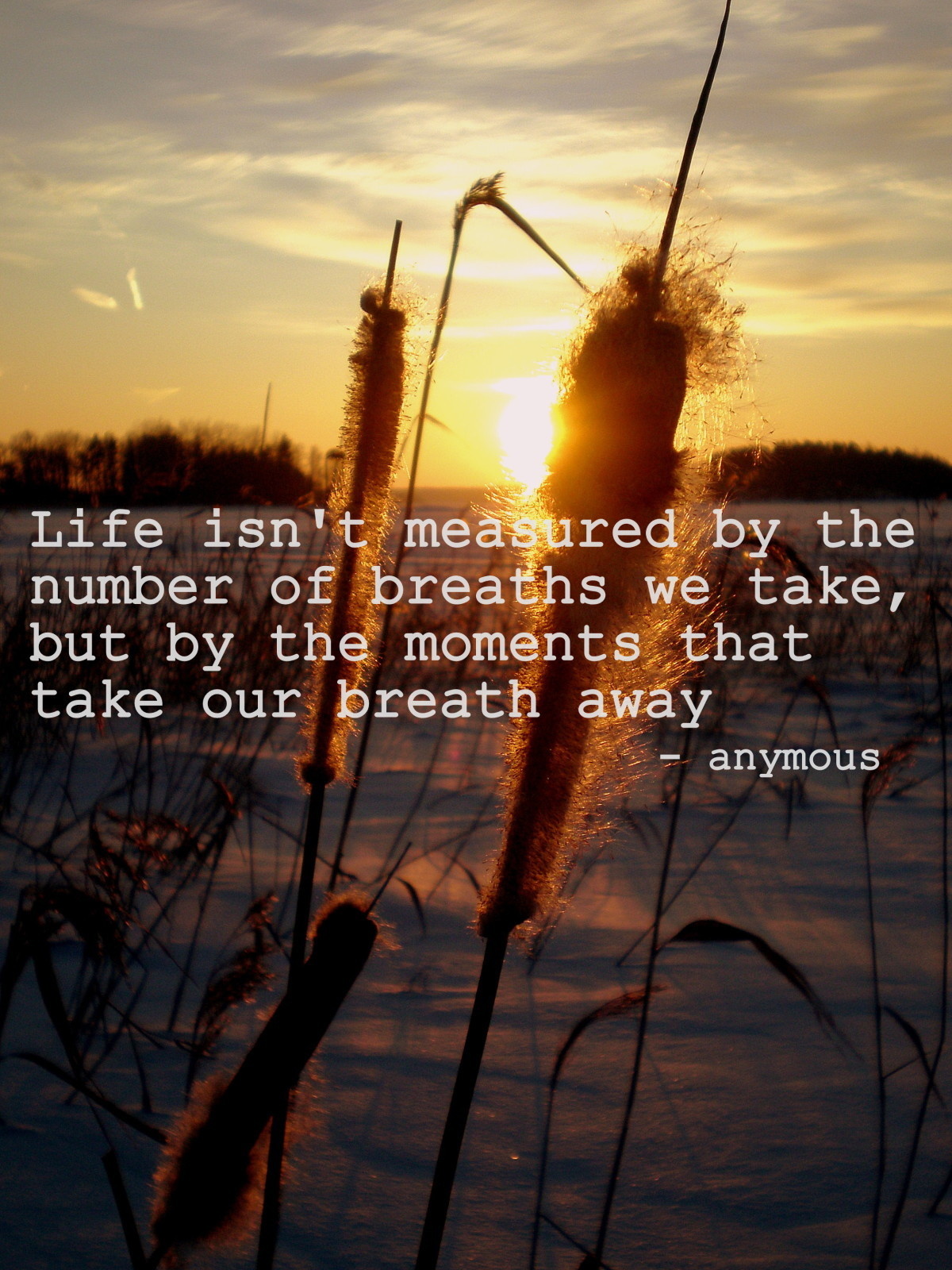Life Isn't Meatured By The Number Of Breaths We Take, But By The Moments That Take Our Breath Away