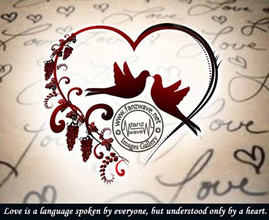 Love Is a Language Spoken By Everyone But Understood Only By a Heart