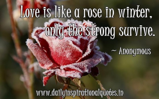 Love Is Like A Rose In Winter. Only The Strong Survive