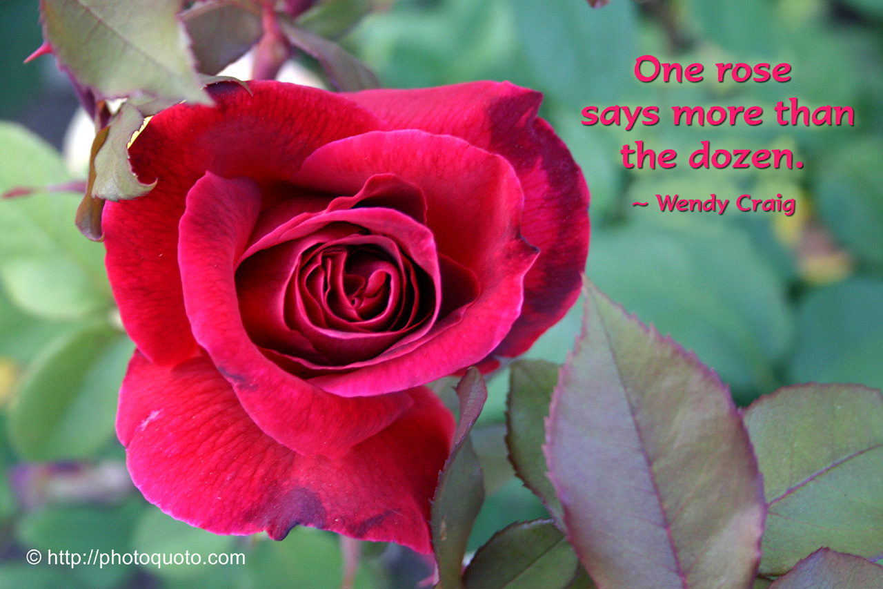 One Rose Says More Than The Dozen