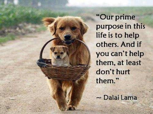 """Our Prime Purpose In This Life Is To Help Others,And If You Can't Help Them, At Least Don't Hurt Them"""