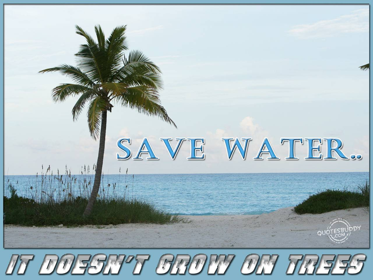 Save Water, It Doesn't Grow On Tree