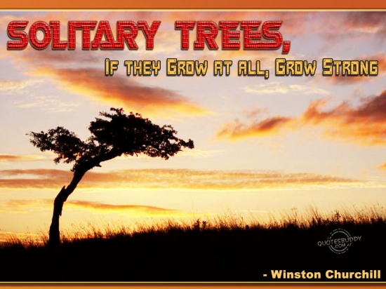 Solitary trees, if they grow at all, grow strong