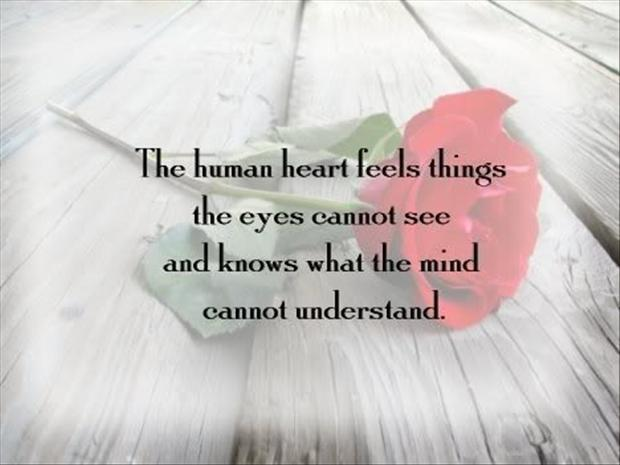 The Human Heart Feels Things The Eyes Cannot See And Knows What The Mind Cannot Understand