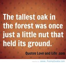 The Tallest Oak In The Forest Was Once Just A Little Nut That Held Its Ground