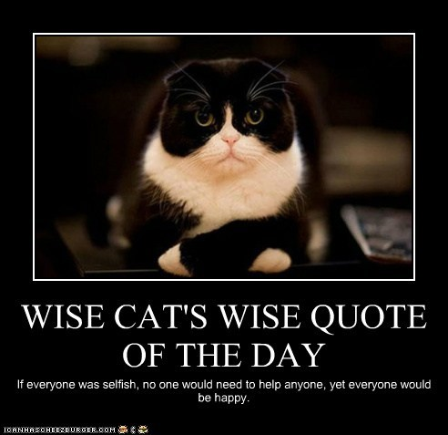Wise Cat's Wise Quote Of The Day
