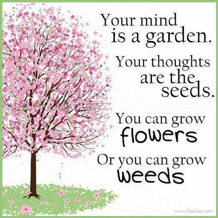 Your Mind Is A Garden. Your Thoughts Are The Seeds. You Can Grow Flowers Or You Can Grow Weeds