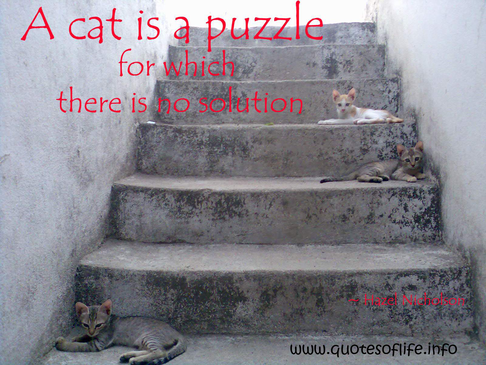 A Cat Is A Puzzle For Which There Is No Solution