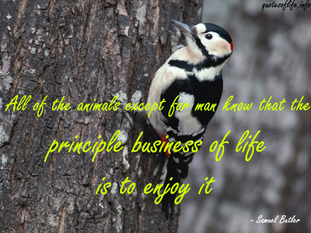 All Of The Animals Except For Man Know That The Principle Business Of Life Is To Enjoy It. - Samuel Butler