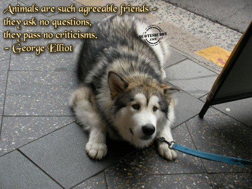 Animals Are Such Agreeable Friends - They Ask No Questions, They Pass No Criticisms - George Elliot