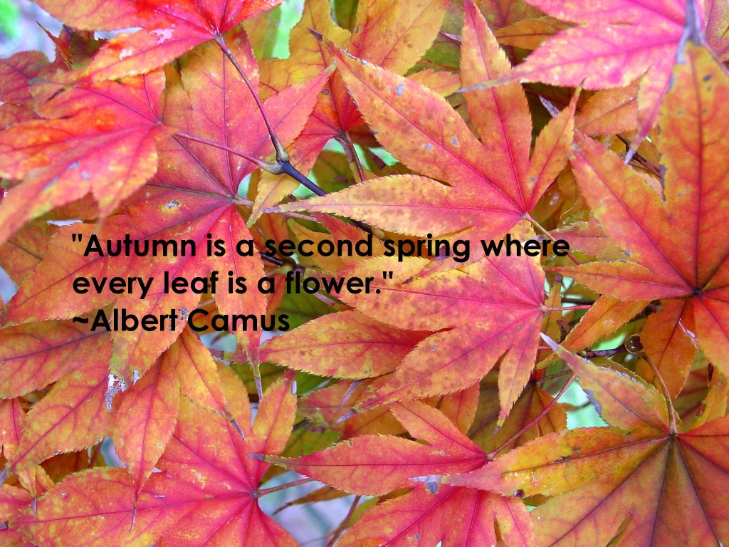 """ Autumn Is A Second Spring Where Every Leaf Is A Flower "" - Albert Camus"