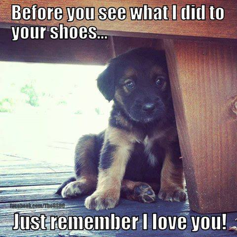 Before You See What I Did To Your Shoes.. Just Remember I Love You!
