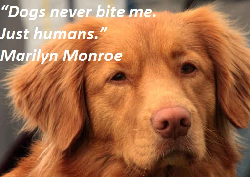 """""""Dogs Never Bite Me, Just Humans"""" - Marilyn Monroe"""
