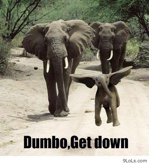 Dumbo, Get Down. Animal Funny Quote