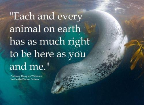 """""""Each And Every Animal On Earth Has As Much Right To Be Here As You And Me"""""""