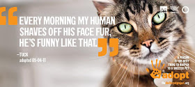 """Every Morning My Human Shaves Off His Face Fur, He's Funny Like That"""