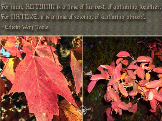For Man, Autumn Is A Time Of Harvest, Of Gathering Together. For Nature, It Is A Time Of Sowing, Of Scattering Abroad. - Edwin Way Teale