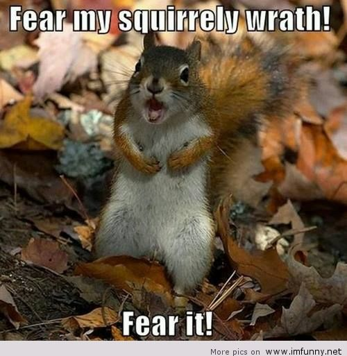 Funny Animal With Cute Saying - Quotespictures.com