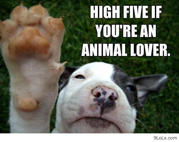 Funny dog quotes for kids - photo#24