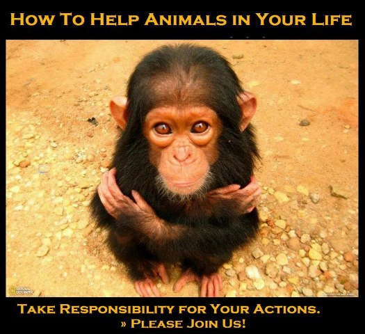 How To Help Animals In Your Life, Take Responsibility For Your Actions. Please Join Us