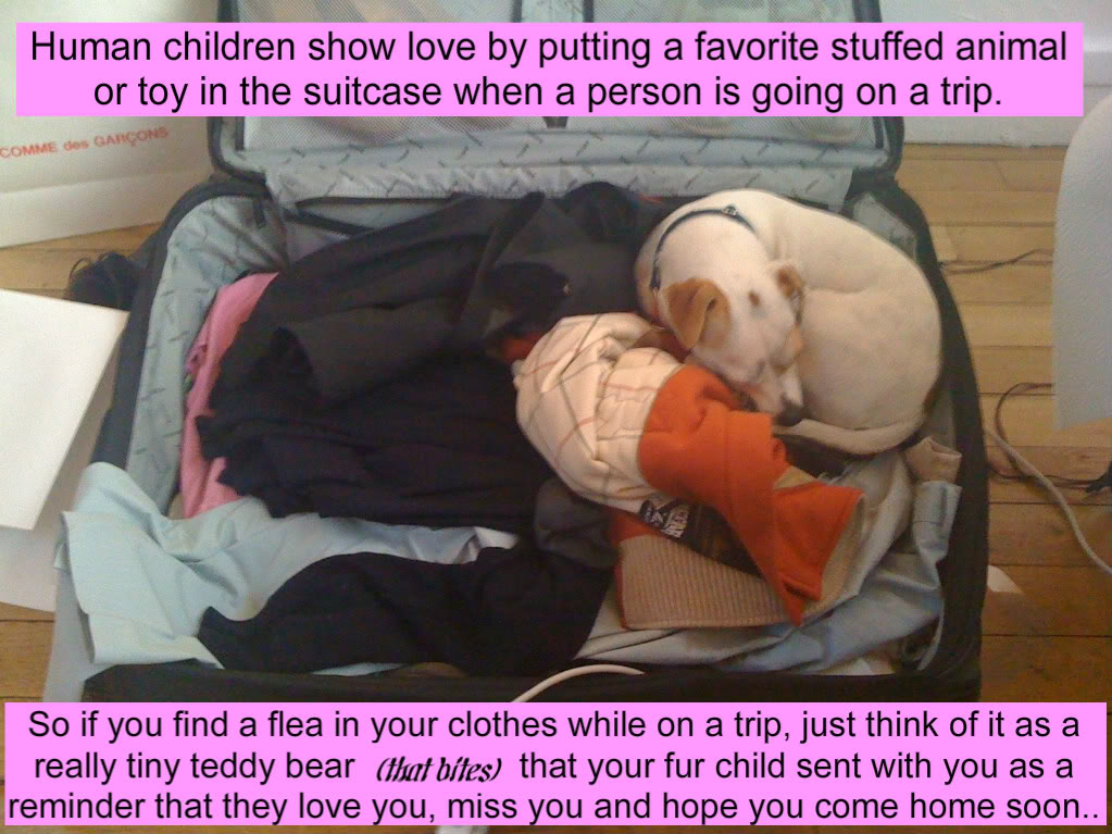 Human Children Show Love By Putting A Favorite Stuffed Animal Or Toy