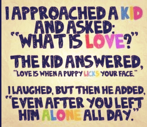 "I Approached A Kid And Asked, ""What Is Love!"" The Kid Answered, ""Love Is When A Puppy Licks Your Face."" I Laughed, But Then He Added, ""Even After You Left Him Alone All Day."""
