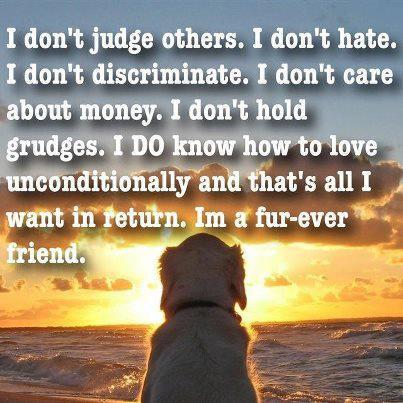 I Don't Judge Others. I Don't Hate. I Don't Discriminate. I Don't Care About Money. I Don't Hold Grudges. I Do Know How To Love Unconditionally And That's All I Want In Return. Im a Fur-Ever Friend