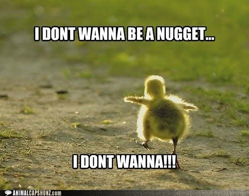 Funny Animal Friday Quotes Nugget Funny Animal Quote