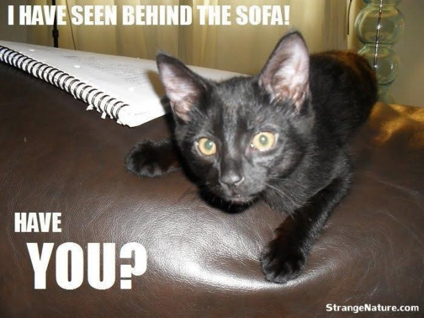 I Have Seen Behind The Sofa! Have You!