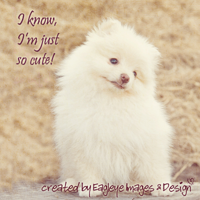 I Know, I'm Just So Cute! Animal Quote - Quotespictures.com