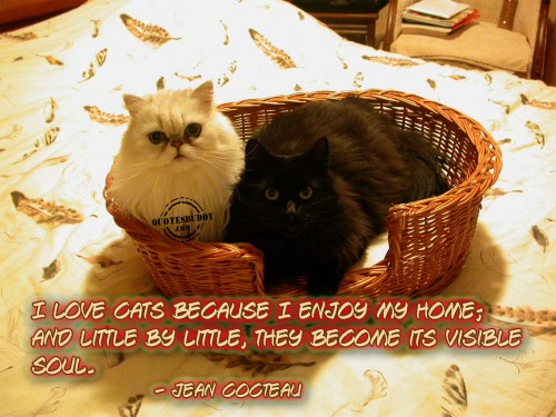 I Love Cats Because I Enjoy My Home; And Little By Little, They Become Its Visible Soul. - Jean Cocteau