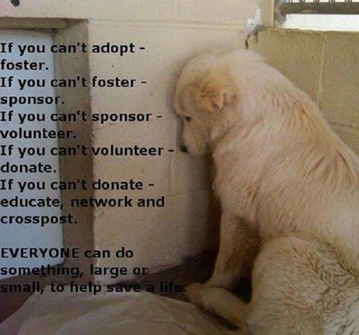 If You Can't Adopt - Foster