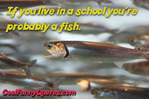 If You Live In a School You're Probably A Fish