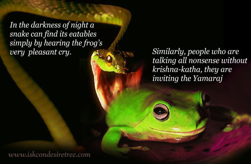 In The Darkness Of Night A Snake Can Find Its Eatables Simply By Hearing The Frog's Very Pleasant Cry…