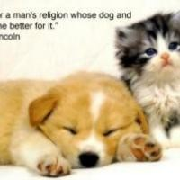 Animal Quotes Images (449 Quotes) - Page 34 ? QuotesPictures.com