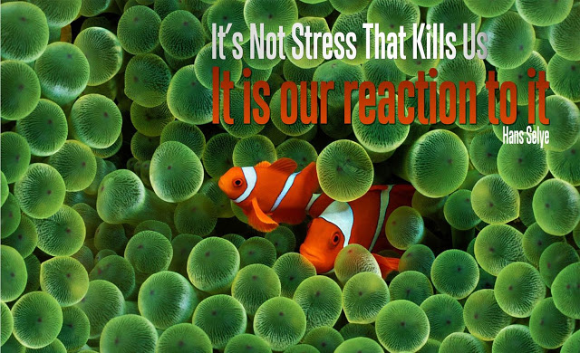 It's Not Stress That Kills Us, It Is Our Reaction To It