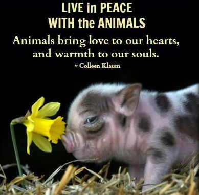 Live In Peace With The Animals, Animals Bring Love To Our Hearts, And Warmth To Our Souls