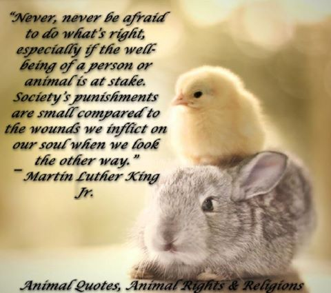 Never, Never Be Afraid To Do What's Right, Especially If The Well Being Of A Person Or Animal Is At Stake… - Martin Luther King Jr.