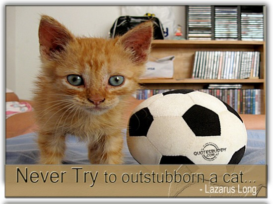 Never Try To Outstubborn A Cat. - Lazarus Long