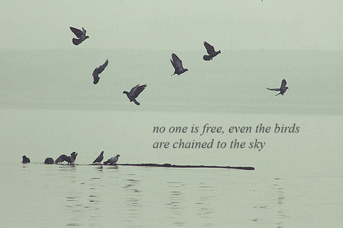 No One Is Free, Even The Birds Are Chained To The Sky