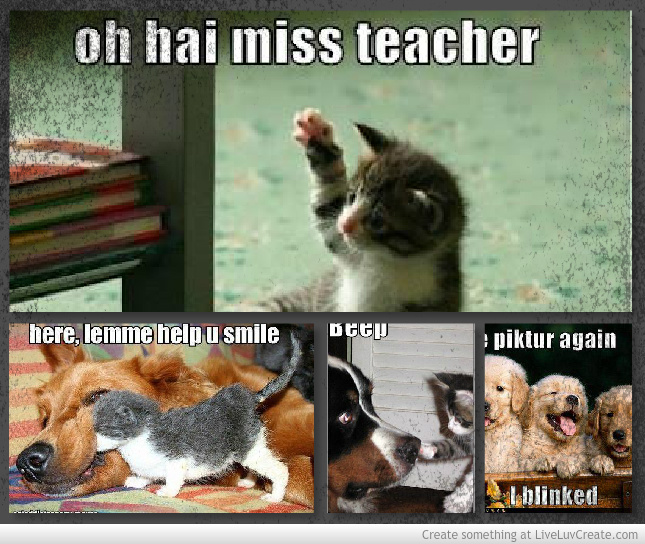 Oh Hai Miss Teacher Funny Animal Quote