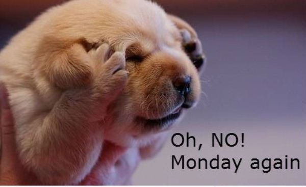 Oh, No! Monday Again, Animal Quote