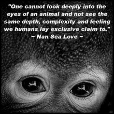 Animal Rights Quotes Fascinating Animal Quotes Pictures And Animal Quotes Images  29
