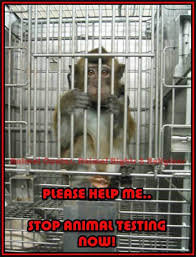 Please Help Me. Stop Animal Testing Now!